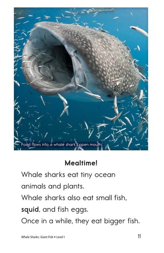 Book Preview For Whale Sharks: Giant Fish Page 11