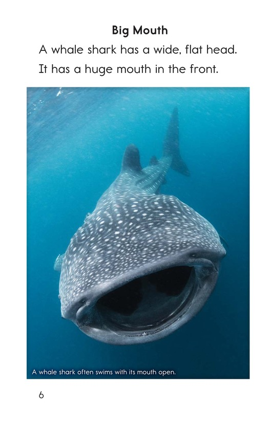 Book Preview For Whale Sharks: Giant Fish Page 6