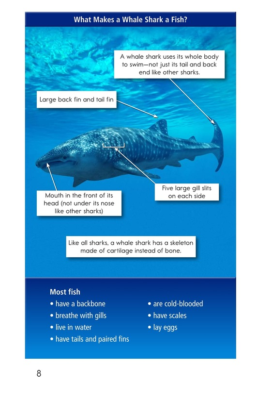 Book Preview For Whale Sharks: Giant Fish Page 8
