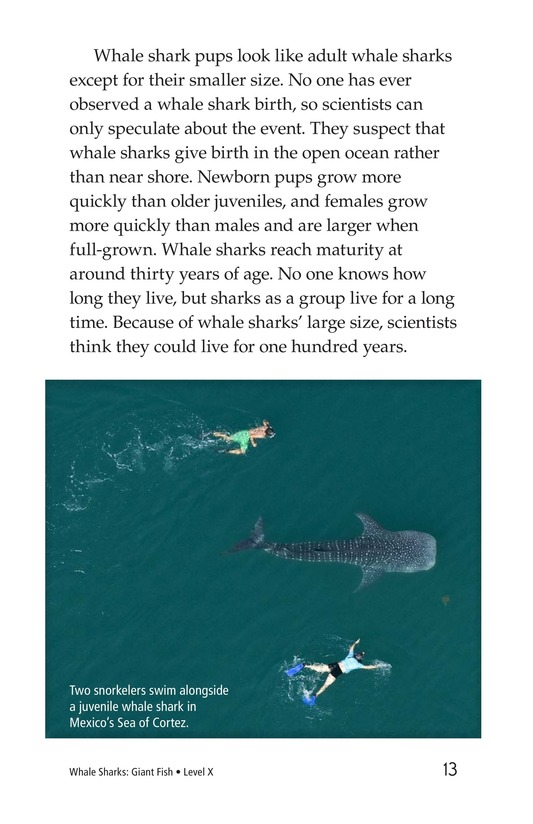 Book Preview For Whale Sharks: Giant Fish Page 13