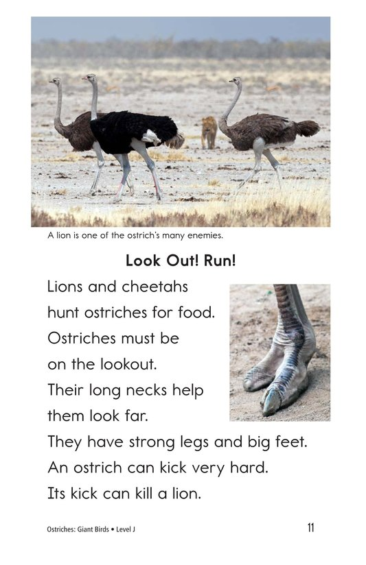 Book Preview For Ostriches: Giant Birds Page 11