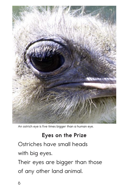 Book Preview For Ostriches: Giant Birds Page 6