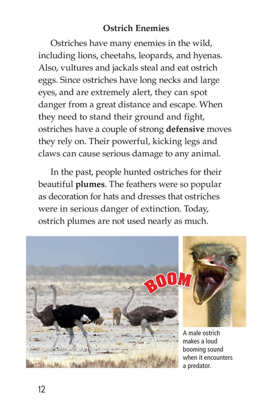 Book Preview For Ostriches: Giant Birds Page 12