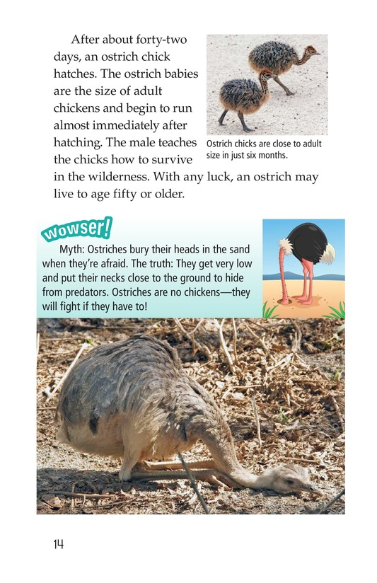 Book Preview For Ostriches: Giant Birds Page 14