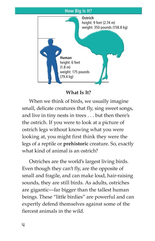 Book Preview For Ostriches: Giant Birds Page 4