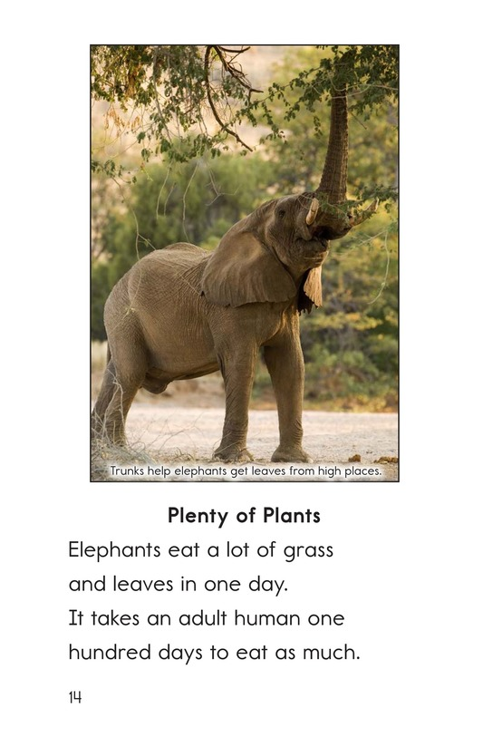Book Preview For Elephants: Giant Mammals Page 14