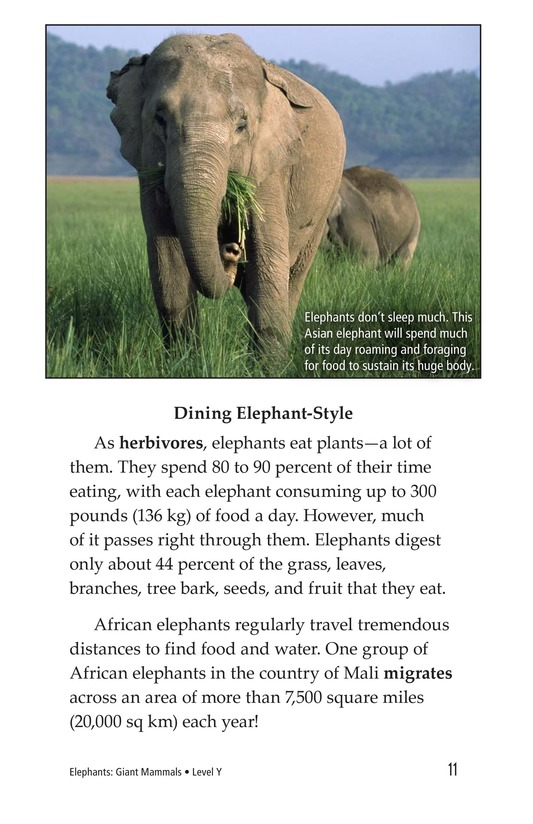 Book Preview For Elephants: Giant Mammals Page 11