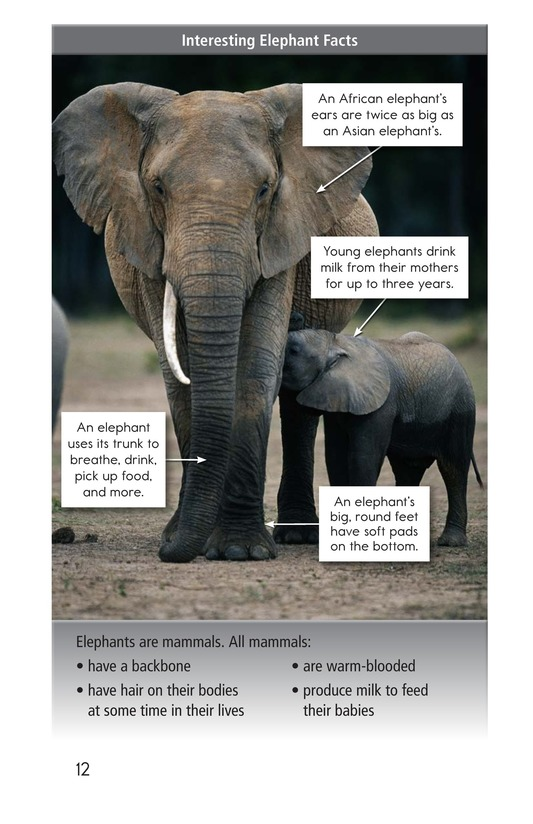 Book Preview For Elephants: Giant Mammals Page 12