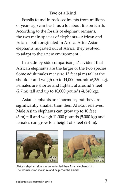 Book Preview For Elephants: Giant Mammals Page 7