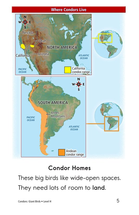 Book Preview For Condors: Giant Birds Page 5