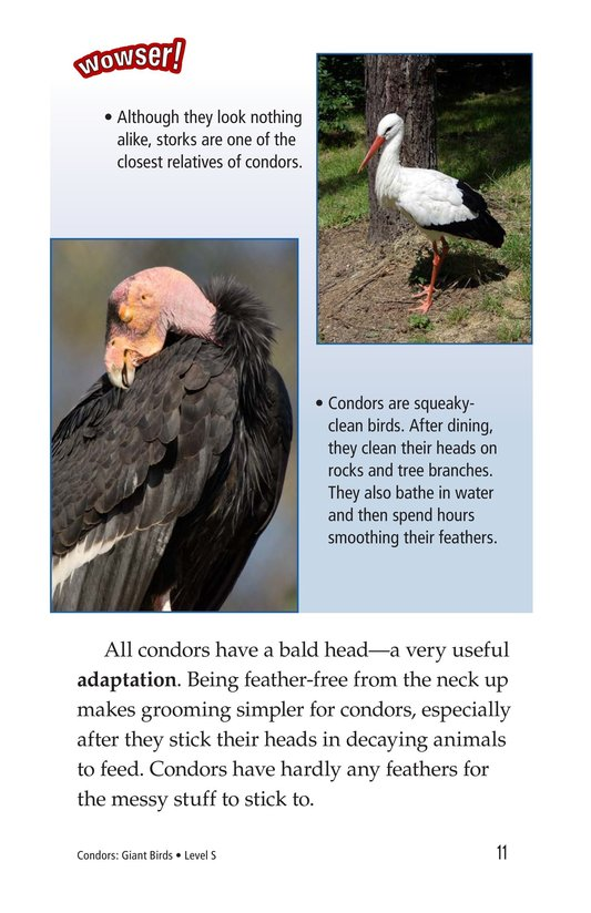 Book Preview For Condors: Giant Birds Page 11
