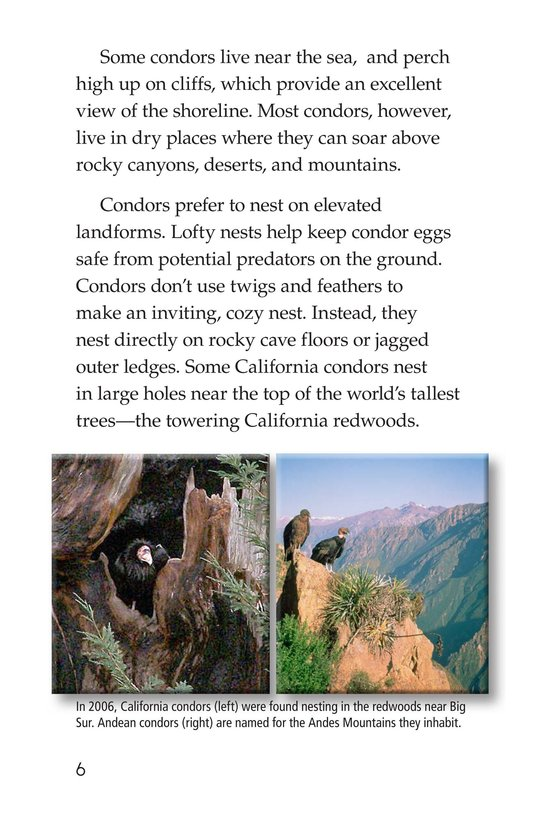 Book Preview For Condors: Giant Birds Page 6