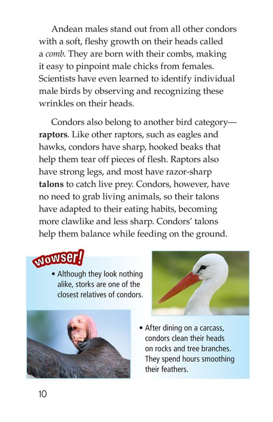 Book Preview For Condors: Giant Birds Page 10