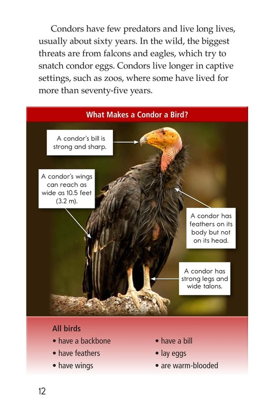 Book Preview For Condors: Giant Birds Page 12