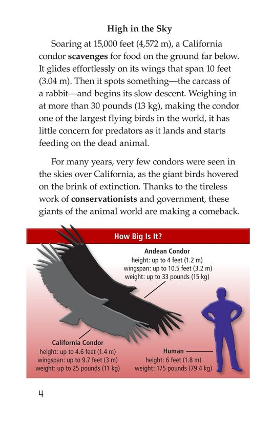 Book Preview For Condors: Giant Birds Page 4