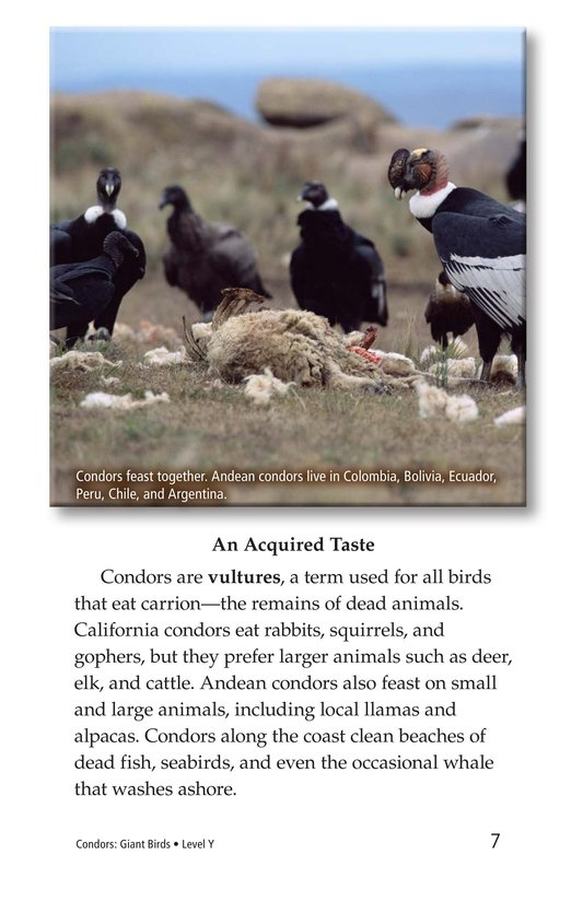 Book Preview For Condors: Giant Birds Page 7