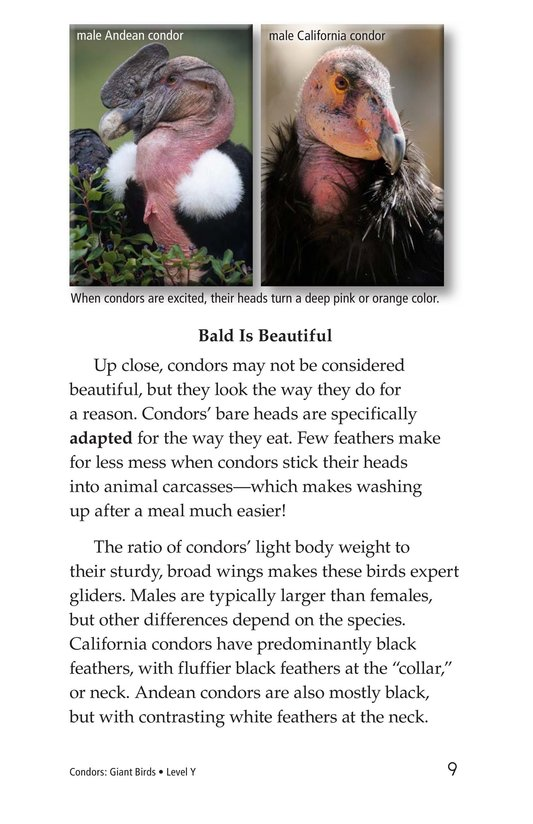 Book Preview For Condors: Giant Birds Page 9