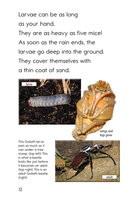 Book Preview For Goliath Beetles: Giant Insects Page 12