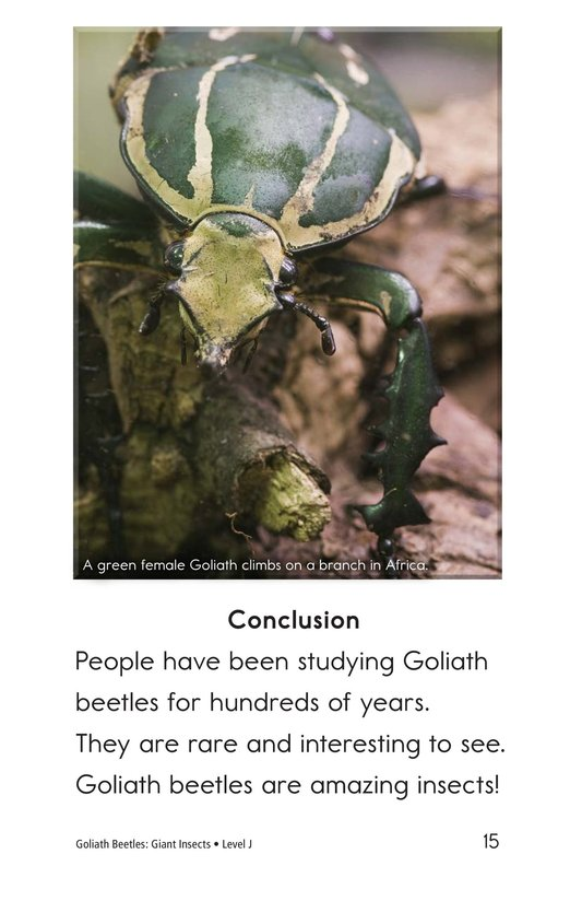 Book Preview For Goliath Beetles: Giant Insects Page 15