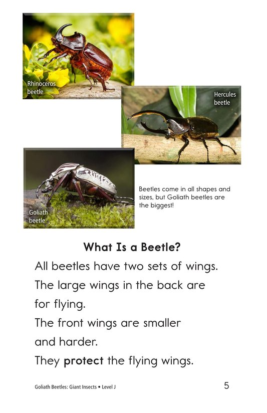 Book Preview For Goliath Beetles: Giant Insects Page 5