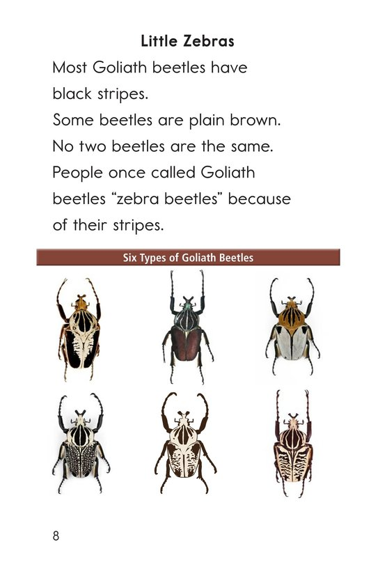 Book Preview For Goliath Beetles: Giant Insects Page 8