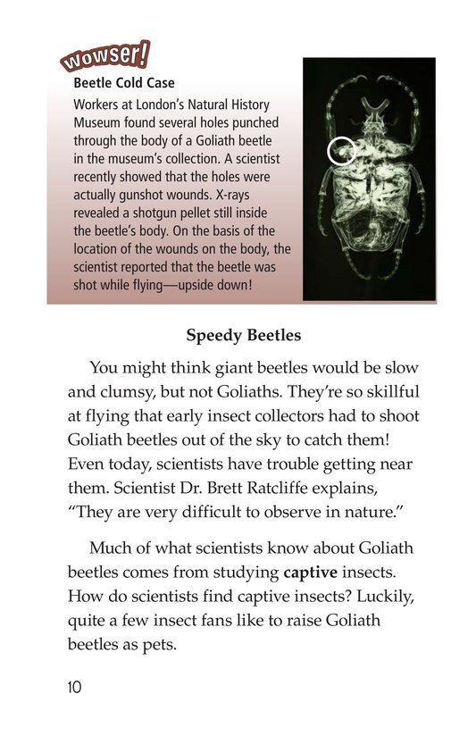 Book Preview For Goliath Beetles: Giant Insects Page 10