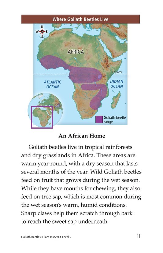Book Preview For Goliath Beetles: Giant Insects Page 11