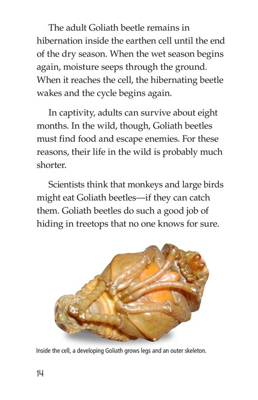 Book Preview For Goliath Beetles: Giant Insects Page 14
