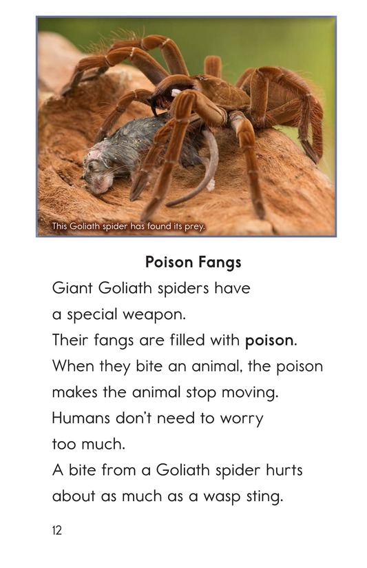 Book Preview For Goliath Bird-Eating Spiders: Giant Arachnids Page 12