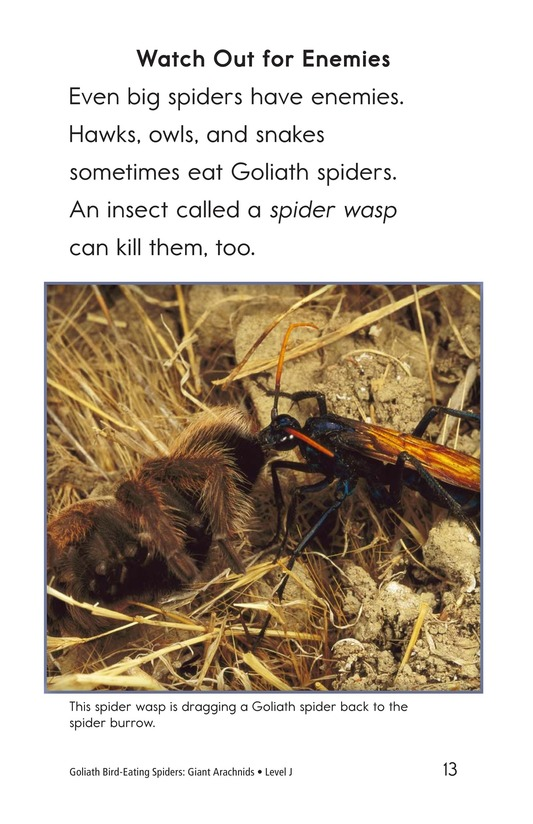 Book Preview For Goliath Bird-Eating Spiders: Giant Arachnids Page 13