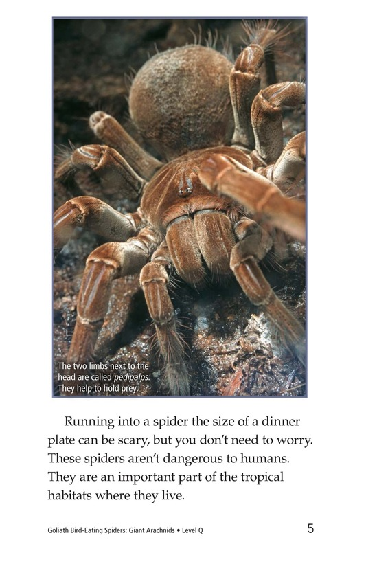 Book Preview For Goliath Bird-Eating Spiders: Giant Arachnids Page 5
