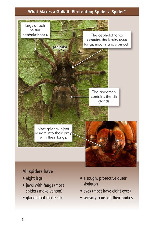 Book Preview For Goliath Bird-Eating Spiders: Giant Arachnids Page 6