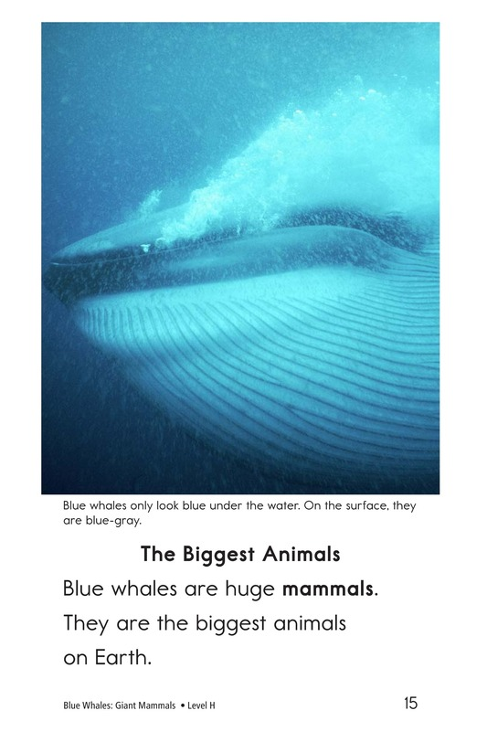 Book Preview For Blue Whales: Giant Mammals Page 15