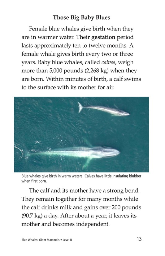 Book Preview For Blue Whales: Giant Mammals Page 13