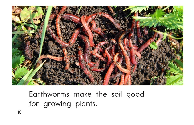 Book Preview For All About Earthworms Page 10