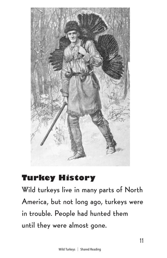 Book Preview For Wild Turkeys Page 11