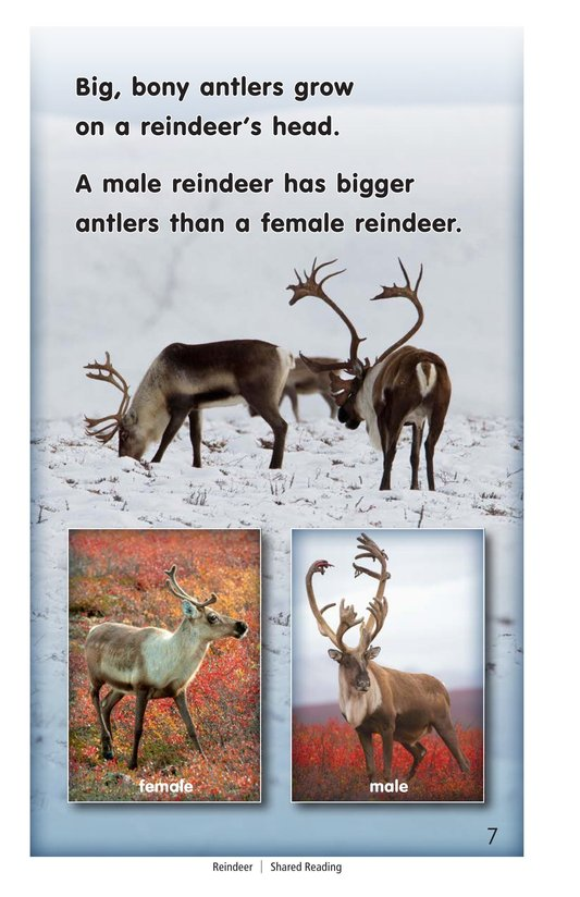 Book Preview For Reindeer Page 7