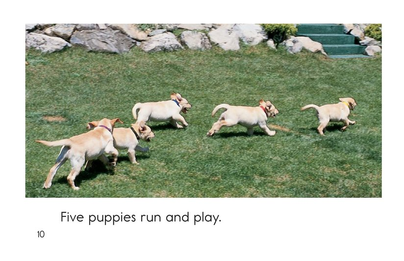 Book Preview For Puppies In, Puppies Out Page 10