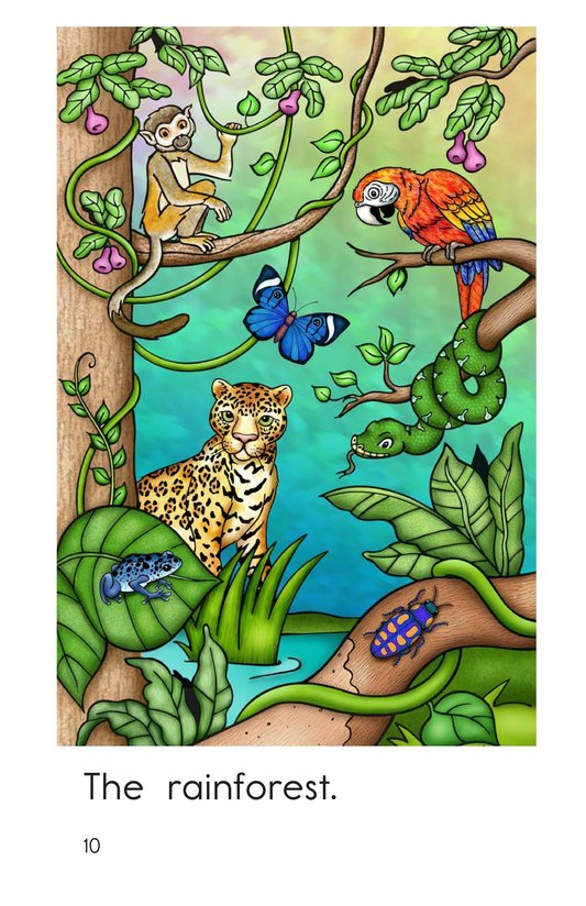 Book Preview For Rainforest Animals Page 10