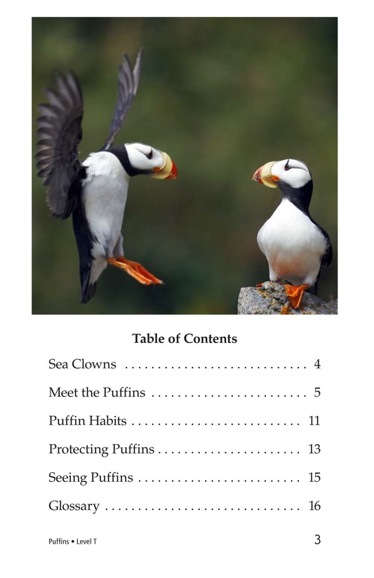 Book Preview For Puffins Page 3