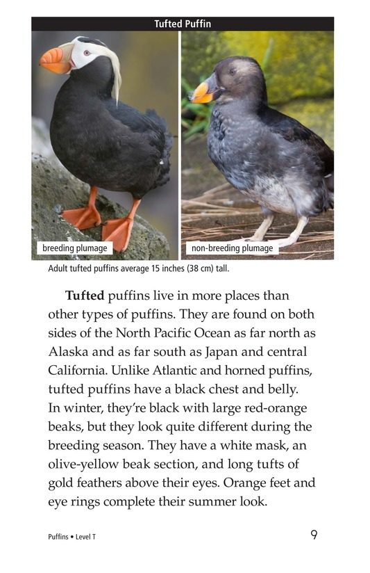 Book Preview For Puffins Page 9