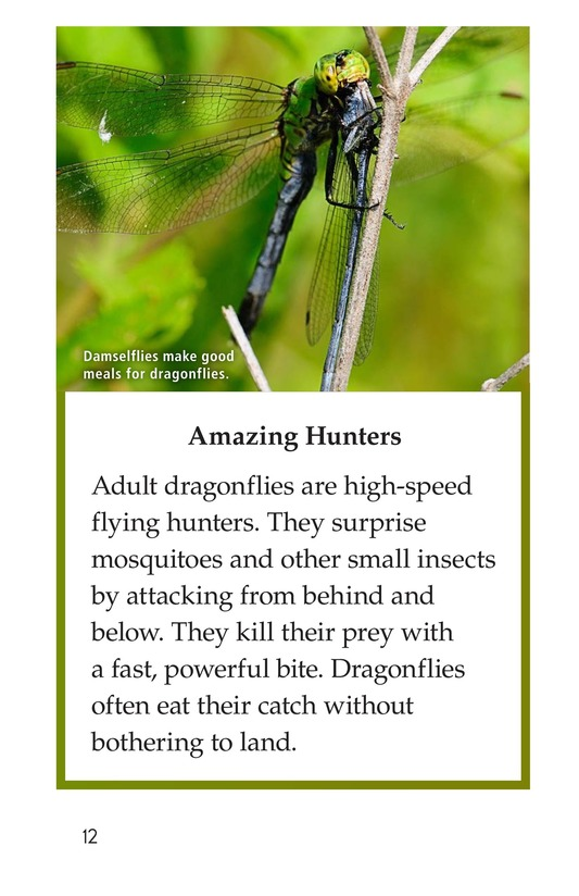 Book Preview For Dragonflies! Page 12