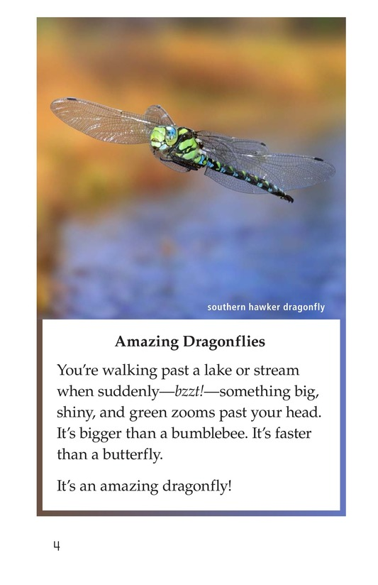 Book Preview For Dragonflies! Page 4