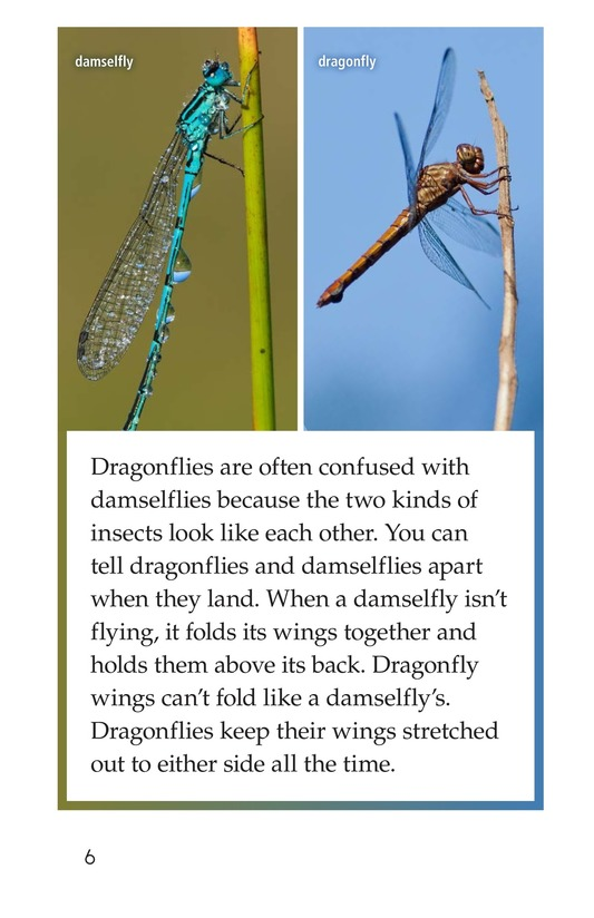 Book Preview For Dragonflies! Page 6