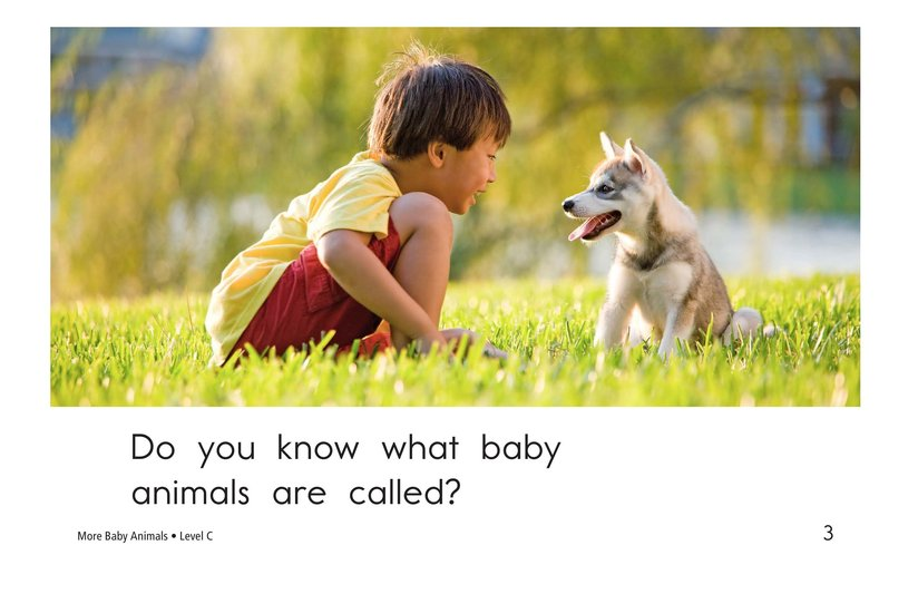 Book Preview For More Baby Animals Page 3