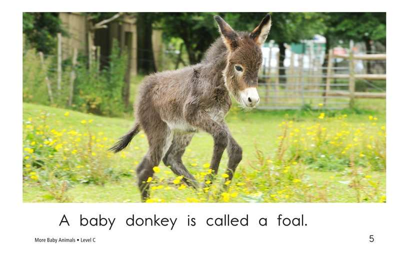 Book Preview For More Baby Animals Page 5