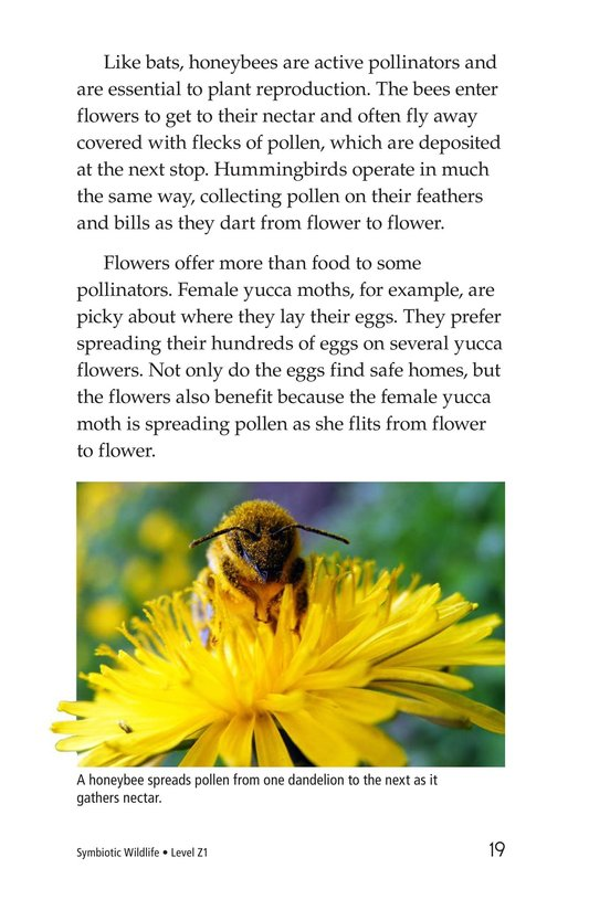 Book Preview For Symbiotic Wildlife Page 19