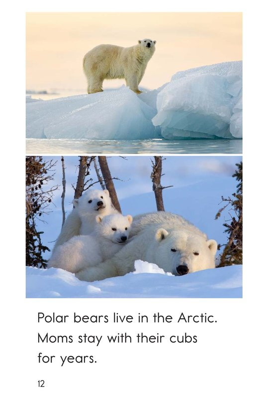 Book Preview For Arctic Animals Page 12