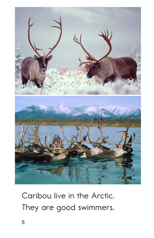 Book Preview For Arctic Animals Page 8