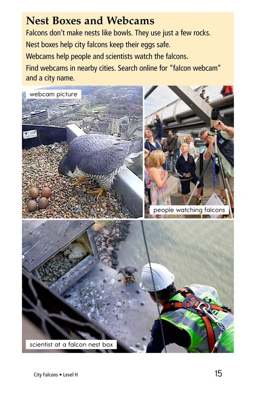 Book Preview For City Falcons Page 15